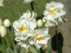 double-narcissi-bridal-crown-440x300
