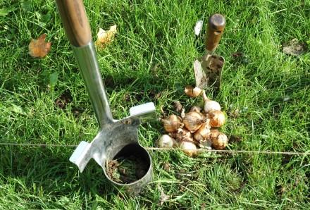 Bulb Planting Tools 2