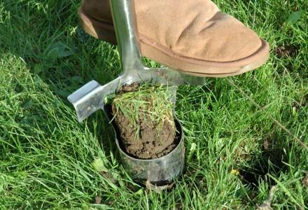Bulb Planting Soil Plug