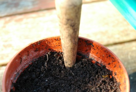 geranium dib a hole