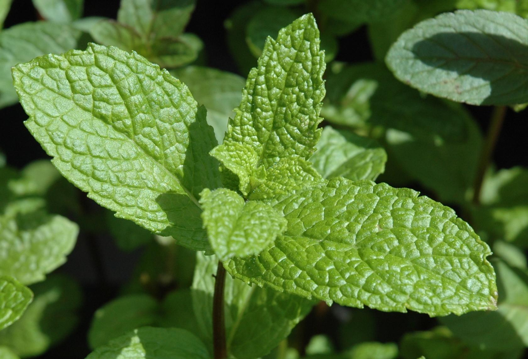Http Www Gardenposts Co Uk 2012 05 General Gardening Herb Garden