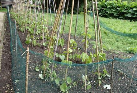 Le-Manoir-Vegetable-Garden
