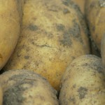 charlotte potatoes crop