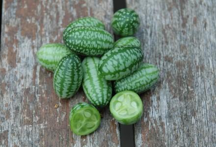 cucamelon crop