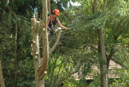 Tree Surgeon